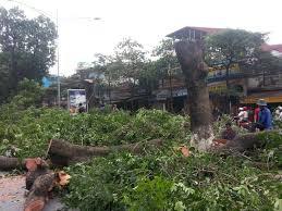 Dịch vụ chặt cây xanh, tỉa cây xanh trước nhà TPHCM